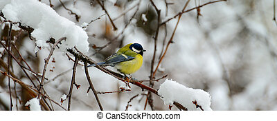 Titmouse sits on a tree branch in winter. Wide photo.