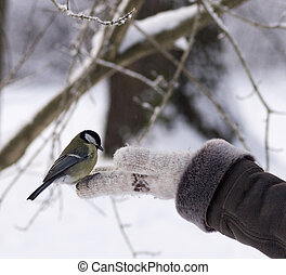 titmouse sitting on a hand
