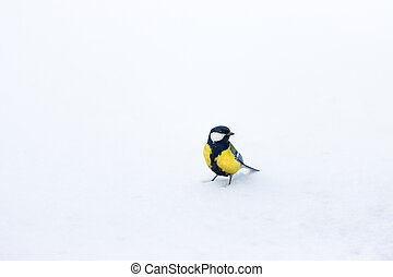 titmouse stands on white snow