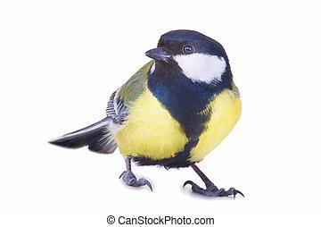 titmouse, vogel, vrijstaand, op wit