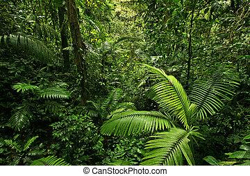 tjock skog, regna, djungel