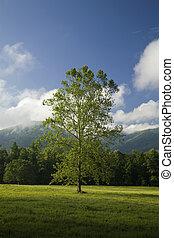 tn, drzewo, zatoczka, cades, gsmnp