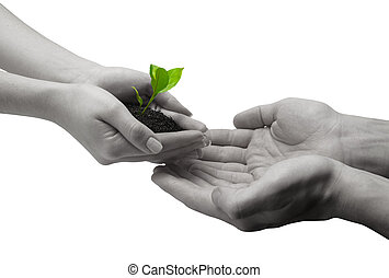 to accept fresh ideas - holding a plant between hands on...