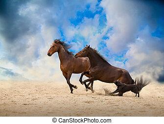 to, brun, heste, løb, hos, den, hund