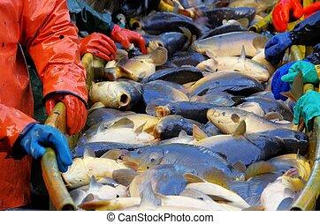 to fish dry
