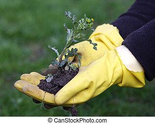 weeds in the garden - to pull up weeds in the garden