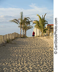To the Beach - A sandy walkway surrounded by palm trees ...