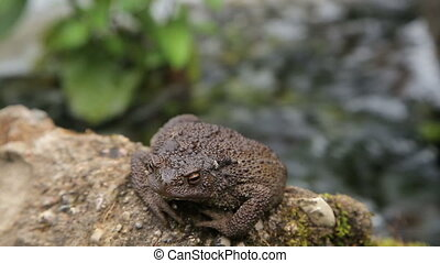 Toad basking on the rock