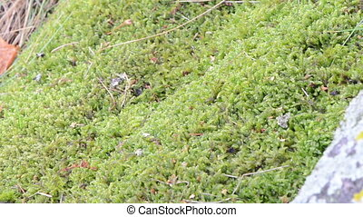 toad crawl moss - toad bufonidae natterjack amphibia animal...