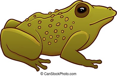 Toad illustration