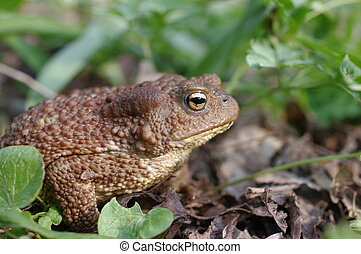 Toad in the foliage