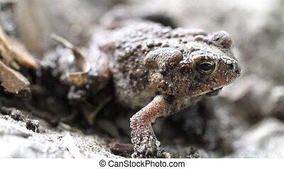 Toad Macro Shot Five