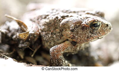 Toad Shot Six Macro