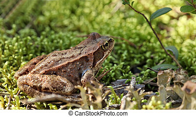 toad sitting in the grass