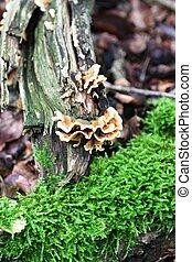 Toad-stool on tree
