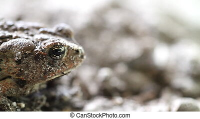 Toad with Copy Space Macro Shot
