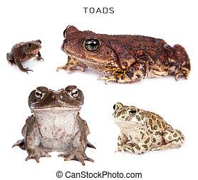 Toads set on white