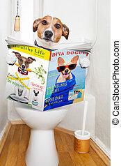 toaleta, pes, posadit