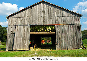 Tobacco Barn A tobacco barn in Kentucky USA. Tobacco hangs to dry in the open air barn and the harvesting equipment can be seen through the doorway.