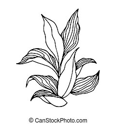 tobacco bush with leaves, agricultural plant, vector ...