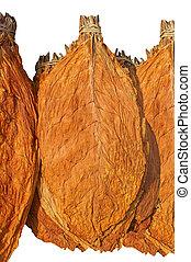 Tobacco leaf - dry leaf tobacco closeup on the white...
