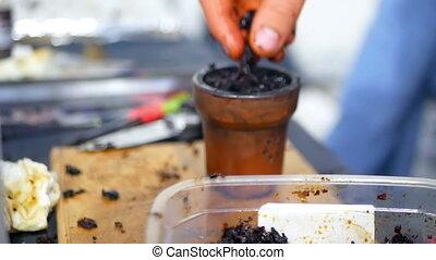 Tobacco smoking hookah - Preparation of a mixture of tobacco