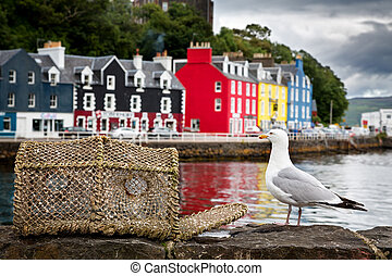 Tobermory seagull - Selective focus on a seagull on the ...