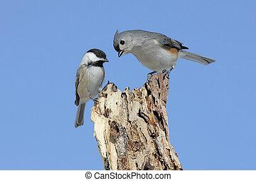 tocón, dos pájaros