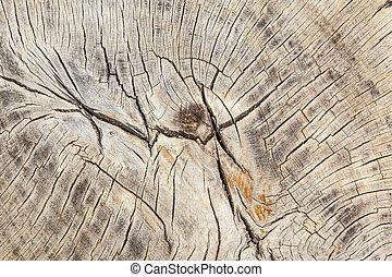 toco, de, árvore, felled, -, seção, de, a, tronco, com,...