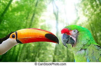Toco toucan and Military Macaw Green parrot in jungle in...