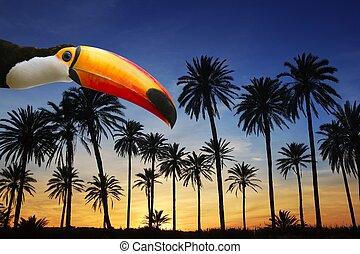 toco toucan, vogel, in, tropische , palme, sonnenuntergangshimmel