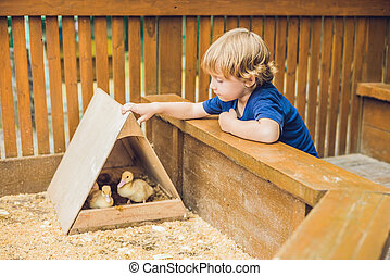 toddler boy caresses and playing with Ducklings in the petting zoo. concept of sustainability, love of nature, respect for the world and love for animals. Ecologic, biologic, vegan, vegetarian