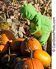 Toddler in Halloween Costume - Toddler dressed up in cute...