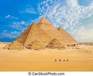 todos, egipto, pirámides, camellos, línea, ambulante, granangular