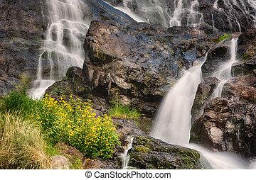 todtnauer, amarelo floresce, floresta, pretas, cachoeiras, ...