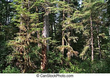 tofino,  BC, canadense, nacional, parque, pacífico, borda, floresta tropical,  Canadá