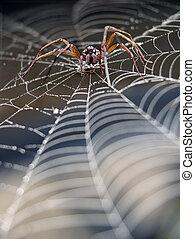 toile araignée, araignés