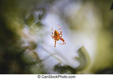 toile araignée, orange, centre, insecte
