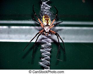toile, araignés, écriture