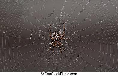 toile, araignés, c'est, centre, grand