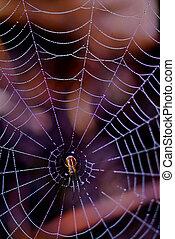 toile, araignés, coloré