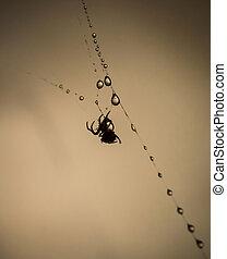 toile, araignés, gouttelettes