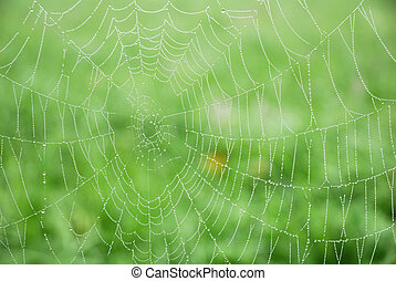 toile, araignés, matin, closeup, fond, rosée