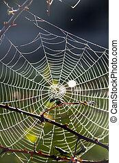 toile, araignés, matin