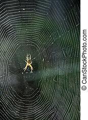 toile, araignés, regard, centre, grand plan
