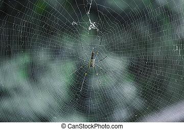 toile, arbre, araignés