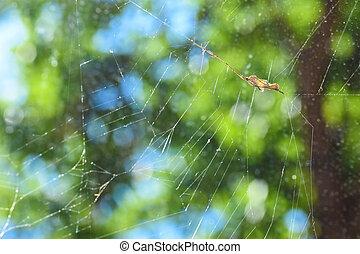 toile, attrapé, araignés, tordu, grand, moustique, il