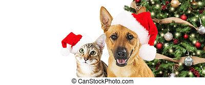 toile, bannière, chien, noël, chat