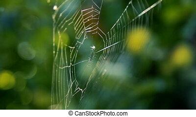toile, branches, jardin, araignée