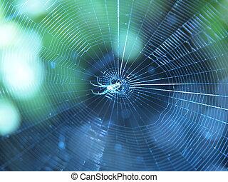 toile, centre, minuscule, araignés